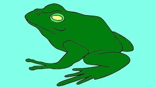 How to Draw Frog from America - American BullFrog Drawing
