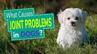 What Causes Joint Problems In Dogs?