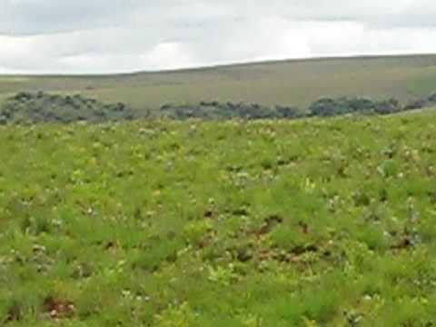 Malawi - Nyika Plateau - Zebras staring at us on the plateau