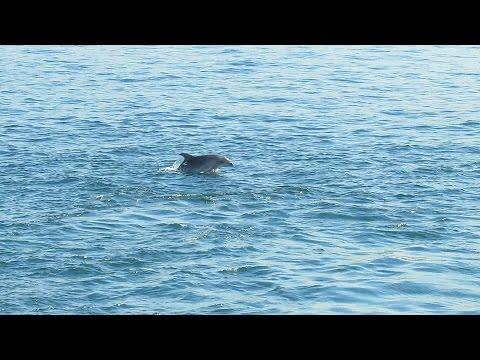 Turkey - 3 of 81 - Istanbul - Bosphorus Boat Tour (boğaz turu) - Watching Dolphins