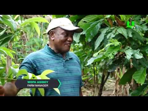 AYEKOO: Best Farming Practices in Ghana | 1 Oct 2018