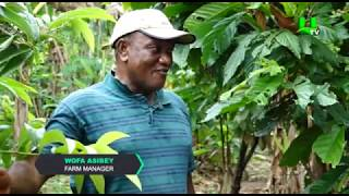 AYEKOO: Best Farming Practices in Ghana