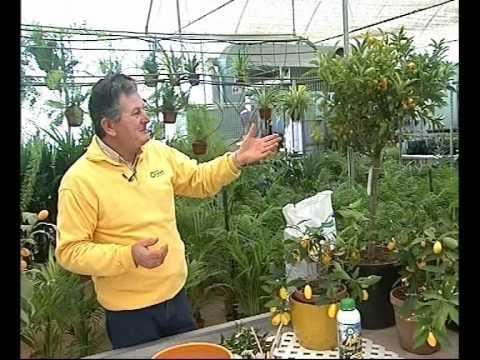 El Jardinero En Casa C Tricos Youtube