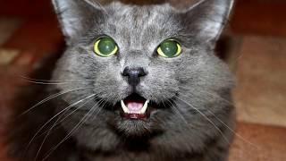Реакция кота на валерьянку😼
