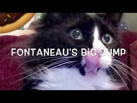 FUNNY CAT ATTACK - FONTANEAU'S BIG JUMP