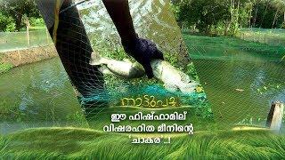 വിനോദത്തിനായി തുടങ്ങി; പൗലോസിന്റെ ഫിഷ്ഫാമില് വിഷരഹിത മീനിന്റെ 'ചാകര'   Nattupacha   Fish farm