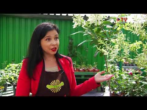 СуперСад Штамбовые растения