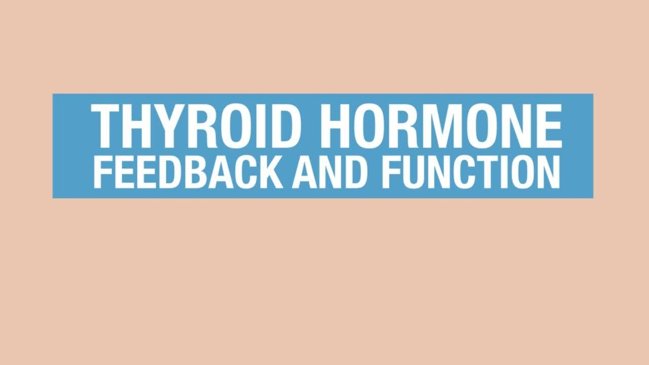 Human Physiology Thyroid Hormone Feedback And Function Youtube