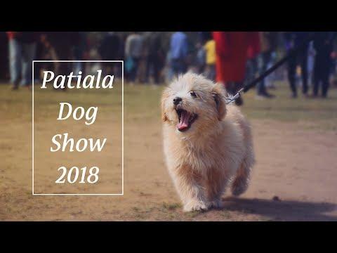 Patiala Dog Show 2018