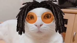 仮装した猫たちがかわいい   Happy Halloween cats are cute.
