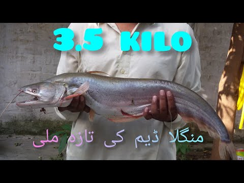 fishing in Pakistan gujar khan village kurki