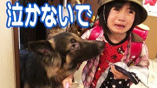 grandchild and #GermanShepherd #dog 大型犬#ジャーマンシェパード犬....