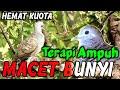 Solusi Perkutut Macet Bunyi Dengan Suara Perkutut Di Alam Saling Sahut  Mp3 - Mp4 Download