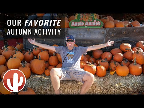 Apple Annie's Pumpkin Patch & Corn Maze | How To Celebrate Autumn In Arizona | Willcox, AZ