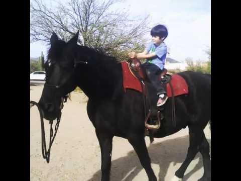 Vance riding Stormy the new Tennessee Walker at Desert Awakenings