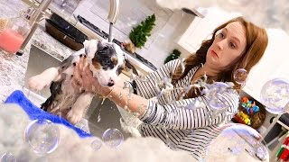 Repeat youtube video 🛁🐶 PUPPY BATH DISASTER! 😱