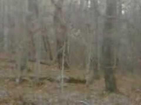 Bigfoot sighting while hunting in hillsboro ohio youtube for Ohio one day fishing license