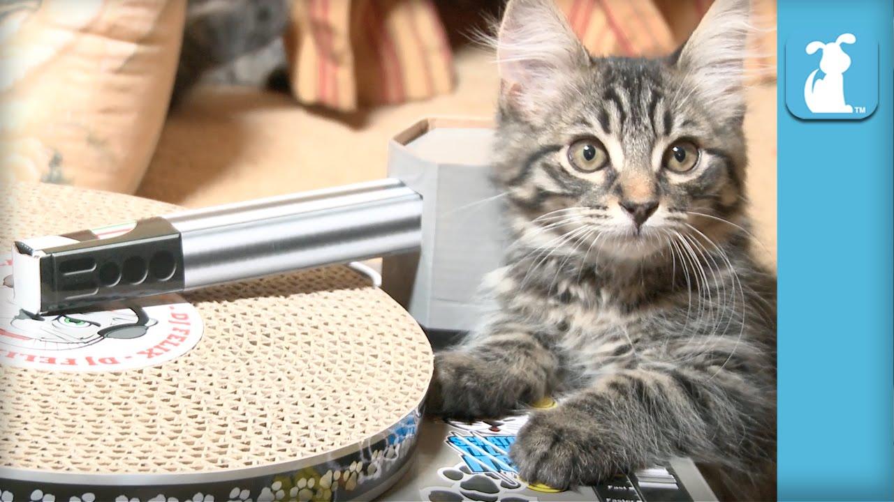 Cat Toys - Kitten's first TURNTABLE! - Kitten Love