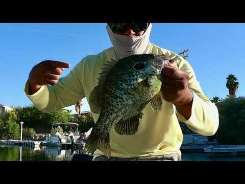 How To Catch Giant Redear Sunfish
