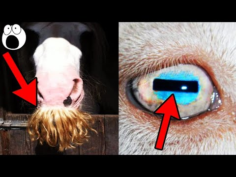 Top 10 Animal Features You Never Noticed Have Special Purposes