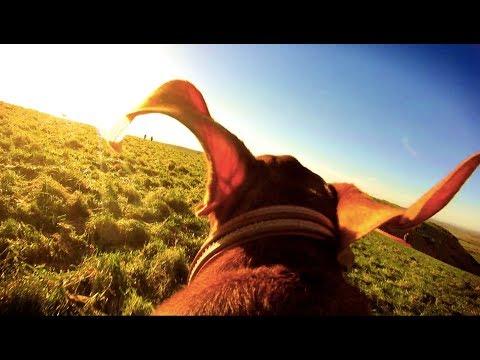 A Dog's Eye View - 3 mins of joy! 🐶 + 🎥 = 😃
