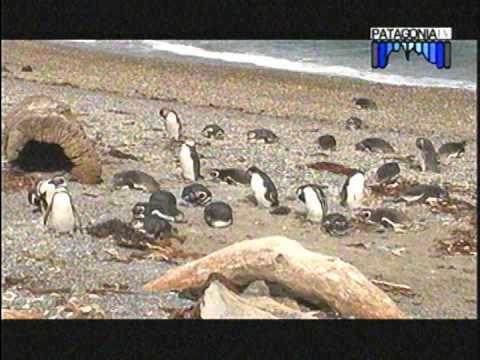 Conociendo Magallanes 2  - Chile -  Patagonia TV