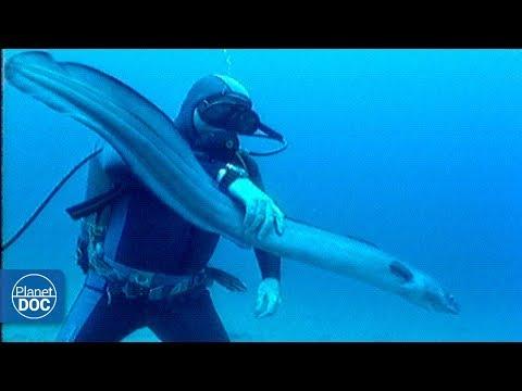 Cabrera Sea Bottom . Balearic Islands - Full Documentary