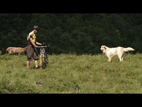 Livestock guardian dogs: The correct behavior in front of Livestock guardian dogs