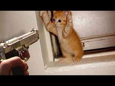 kucing-main-tik-tok