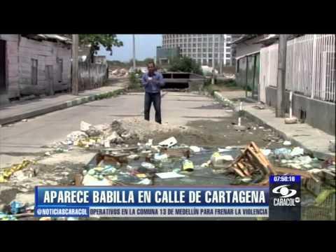 Aparece babilla en calles de Cartagena - 13 de marzo de 2013