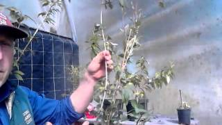 How To Propagating Shrubs And Trees