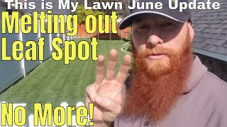 DIY How to fix melting out fungus, leaf spot fungus UPDATE.  Overseed 3 week update. This is My Lawn