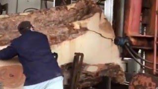 Lumber of horse chestnut 2