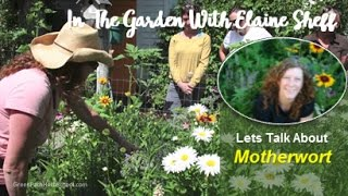 Green Path Herb School - Herbalist Elaine Sheff talks about Motherw...
