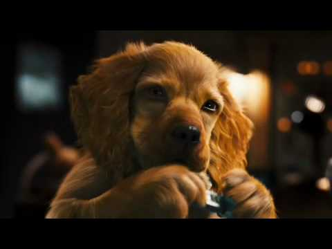 Кошки против собак Галор | Cats & Dogs — Трейлер 1