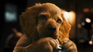 Кошки против собак Галор | Cats & Dogs - Трейлер 1
