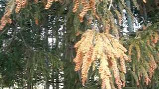 山元町~亘理町の東街道沿いの杉花粉が今年も猛威予想かな.