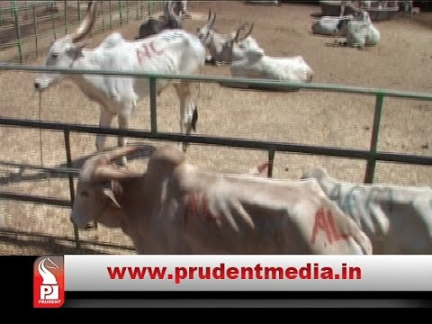 VHP'S BEEF BAN CRY EVOKES STRONG RESENTMENT