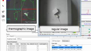 Video tracking an animal with thermographic camera