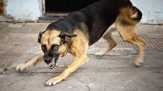 Нападение бродячих агрессивных стаи собак на людей. Бесплатные видео ужасы 2021