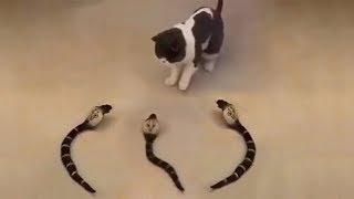 「猫かわいい」 すごくかわいい子猫 - 最も面白い猫の映画 #269 https:/...