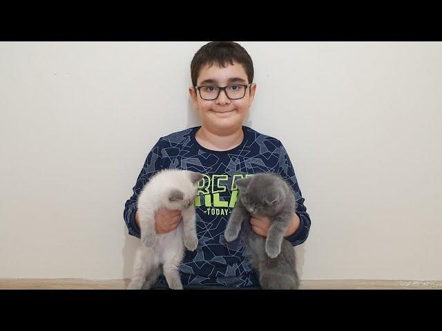 Buğra Yavru Kediler ile Oynuyor. Buğra Plays With Kittens