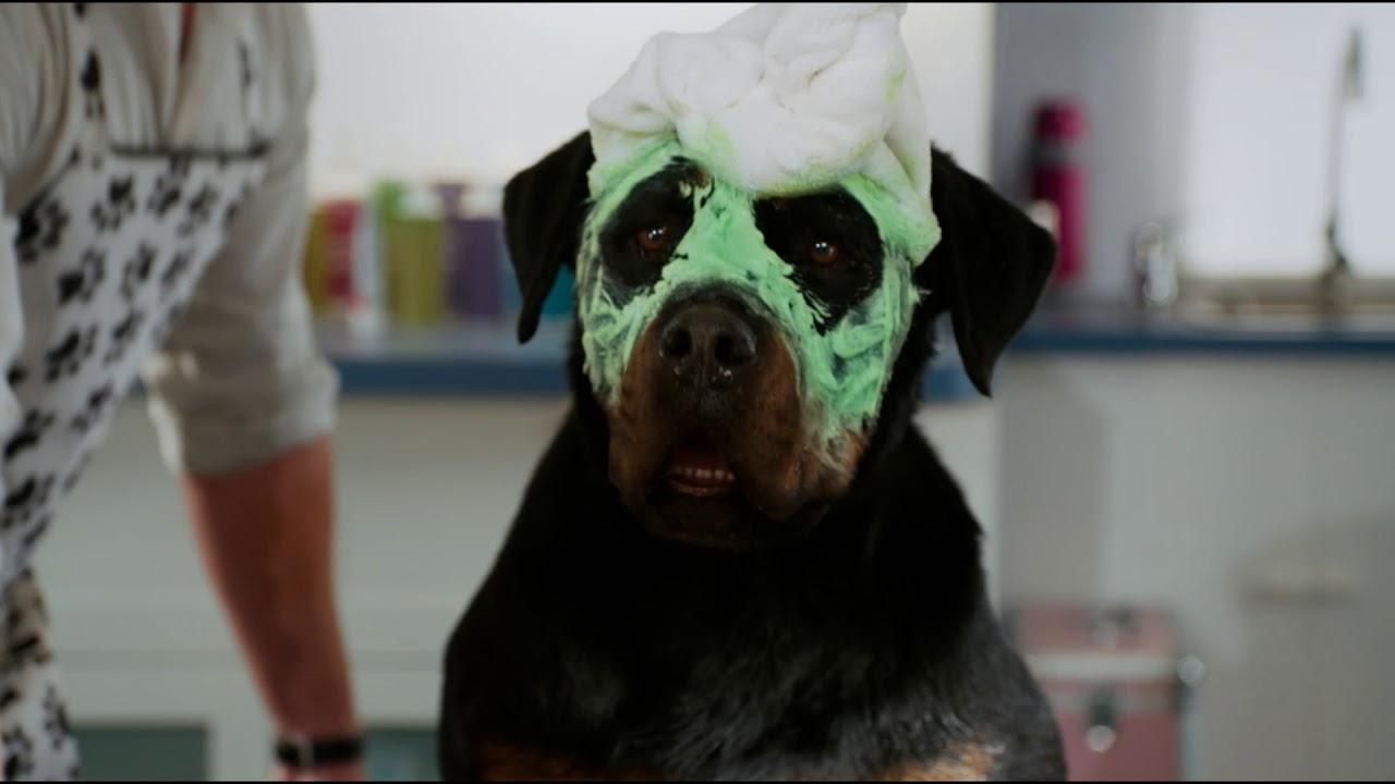 PSÍ DETEKTÍV (trailer) - rodinná komédia od 28. júna v kinách
