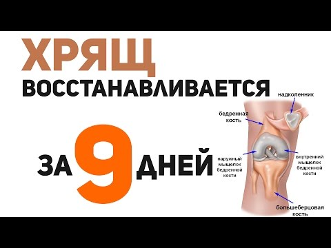 The repair of cartilage in 9 days! It is possible!