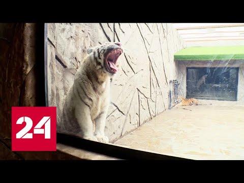 В Калуге звери экопарка с нетерпением ждут встречи с посетителями - Россия 24