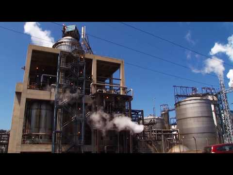 How they make Cellulose