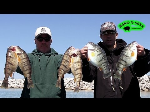 How To Catch BIGGEST Lake Michigan Perch Fishing Fish Instruction Video Demonstration