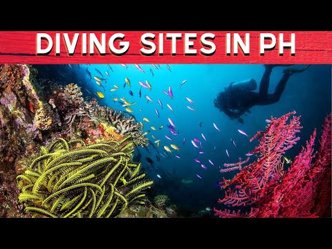Top 10 Diving Sites in the Philippines You Must Visit - Philippines Travel Site
