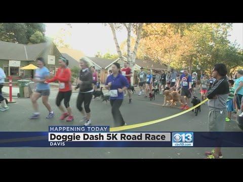 Owners, Pets Run In Davis Doggy Dash 5K