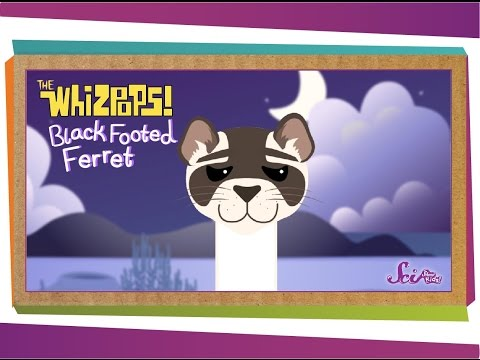 Whizpops! Black Footed Ferret Music Video